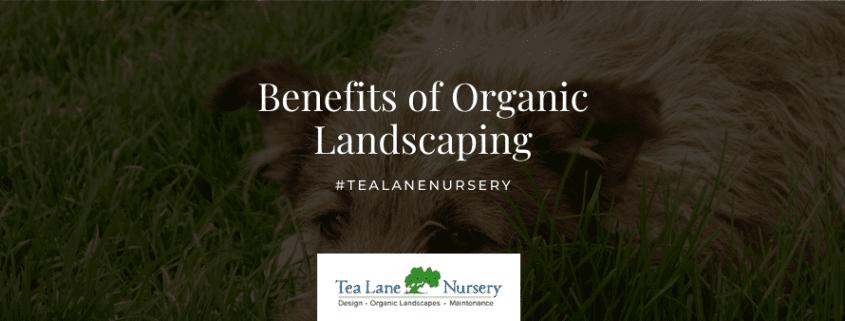 Benefits of Organic Landscaping (1)