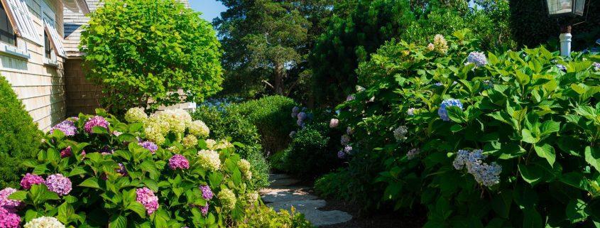 Create An Organic Landscape